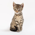 Cat young and nice little with look Stock Photography