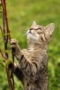 Cat young trying to climb on branch Stock Photos