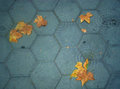 Catalunyan floor with some leaves Stock Image