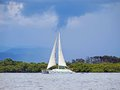Catamaran with stormy sky and mangrove in background Stock Image