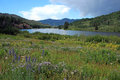 Cataract lake colorado a field of wild flowers frame Royalty Free Stock Image