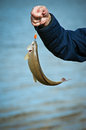 Catching a Fish Royalty Free Stock Photo