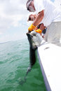 Catching a Tarpon Stock Photo