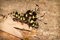 Caterpillar Stock Photography