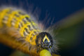 Caterpillar front view Royalty Free Stock Images