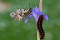 Caterpillar macro in green nature Royalty Free Stock Photo