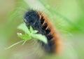 https---www.dreamstime.com-stock-photo-closeup-furry-caterpillar-crawling-slowly-grass-closeup-furry-caterpillar-field-image111297781