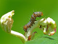 Caterpillar posing closeup of a on a plant Stock Image