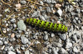 Caterpillar on stones green closeup Royalty Free Stock Photos