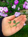 Caterpillars! Royalty Free Stock Photo