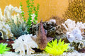 Catfish in tropical and exotic aquarium bright composition a with corals colorful sea flora the center of the composition lying on Stock Image
