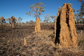 Cathedral termite mounds, Australia Stock Photography