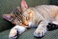 Catnap a grey and brown female tabby cat napping on a comfortable sofa Stock Photos