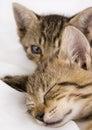 Cats Στοκ Φωτογραφία