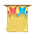 Cats in bed. Cute cat sleeping love. Lover holiday14 February. V