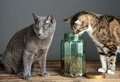 Cats And Cat Food In Glass