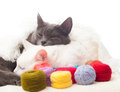 Cats and coils with multi-colored threads Royalty Free Stock Photo