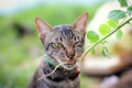 Cats eat grass, whiskers Royalty Free Stock Photos