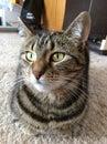 Cats face cat looking at camera Royalty Free Stock Photos