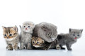 Cats family portrait Stock Image