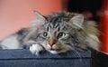 Cats, lovely fluffy pets.