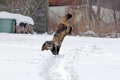 Cats playing and jumping in snow