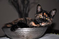 Cats pleasure lies in the gray cat dish Royalty Free Stock Images