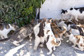 Cats on samos in greece Royalty Free Stock Photos