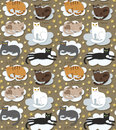 Cats seamless funny background Royalty Free Stock Photo