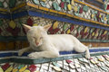 Cats sleep a vagabond cat live in the buddhist temple Royalty Free Stock Photo