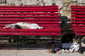 Cats sleeping twisted and stretching Royalty Free Stock Photo