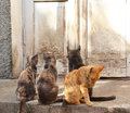 Cats waiting for dinner different colors Royalty Free Stock Photography