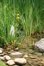 Cattails Stock Images