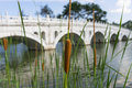 Cattails growing at the edge of river with stone bridge at the background Stock Images