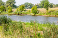 Cattails by river and grasses along the platte in denver colorado Stock Image