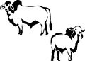 Cattle brahman and zebu black illustrations Royalty Free Stock Photo
