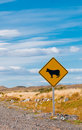 Cattle crossing warning road sign Stock Photos