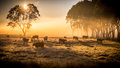Cattle in the morning Royalty Free Stock Photo