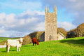 Cattle and Morwenstowe Church, Devon, England Royalty Free Stock Photo