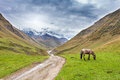 Caucasus rural landscape in georgia with horse ushguli region swanetia Royalty Free Stock Photo