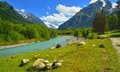 Caucasus valley this is aksaut in caucasis mountains in summer Royalty Free Stock Image