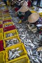 Caught fishes sorting to baskets by Vietnamese women workers in Tac Cau fishing port, Me Kong delta province of Kien Giang, south Royalty Free Stock Photo