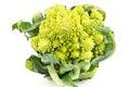 Cauliflower romanesco fresh on white background Royalty Free Stock Photo