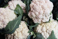 Cauliflowers, bunch of Stock Images