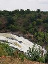 Cauvery River flowing, plants, trees, water flowing, monkey skyline