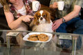 Cavalier with guilty expession. Royalty Free Stock Images