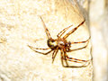Cave orb weaver meta ovalis spider at maquoketa caves state park in iowa Royalty Free Stock Photography