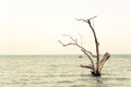 Cean landscape with lonely dead tree Royalty Free Stock Image