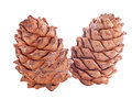Cedar cones two over white Stock Images