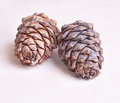 Cedar cones two over wood background Royalty Free Stock Photos